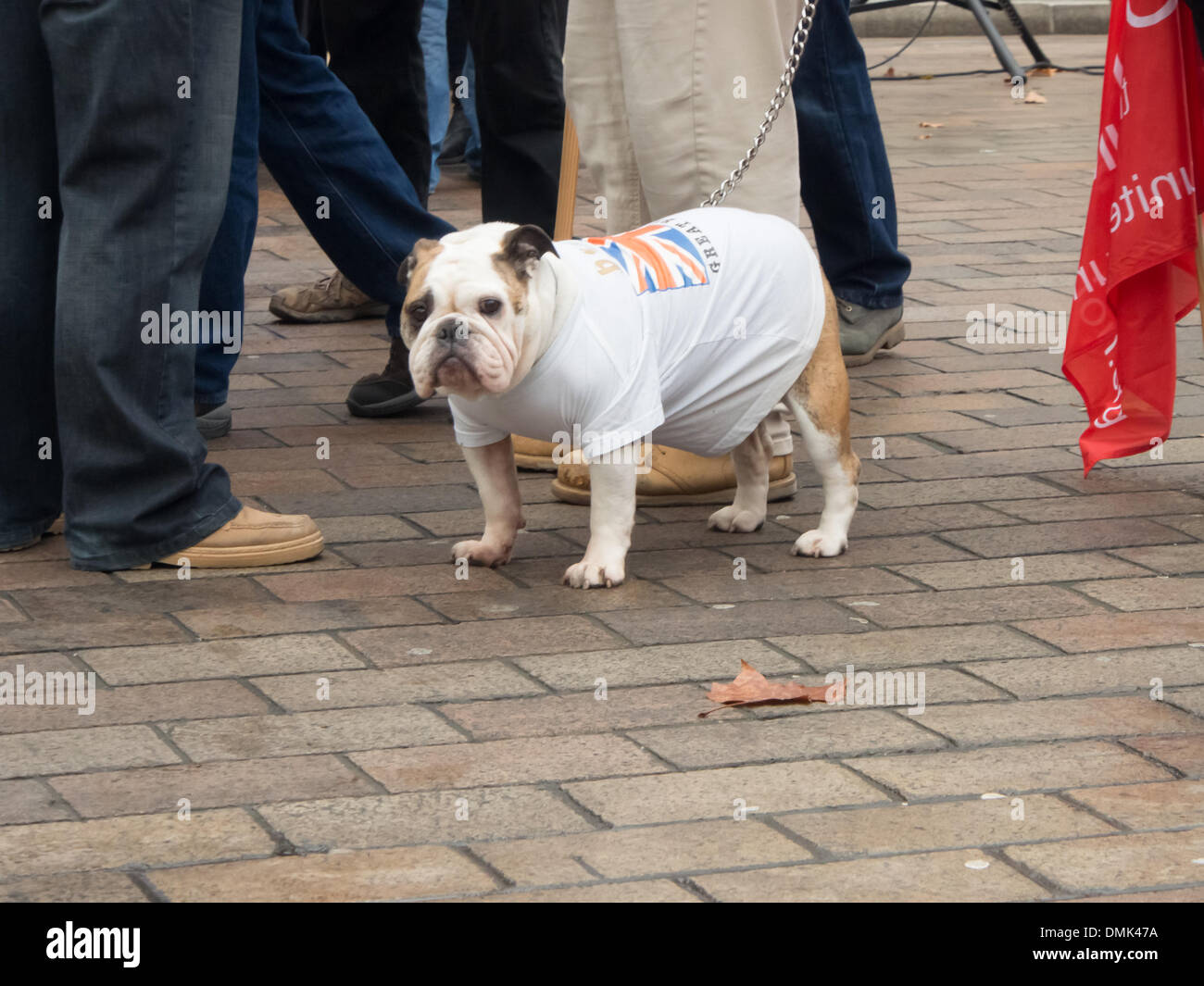 Portsmouth, UK. 14th December 2013. A bulldog wears a T-shirt during a protest against the possible closure of BAE shipbuilding facilities within the Dockyard  Credit:  simon evans/Alamy Live News - Stock Image