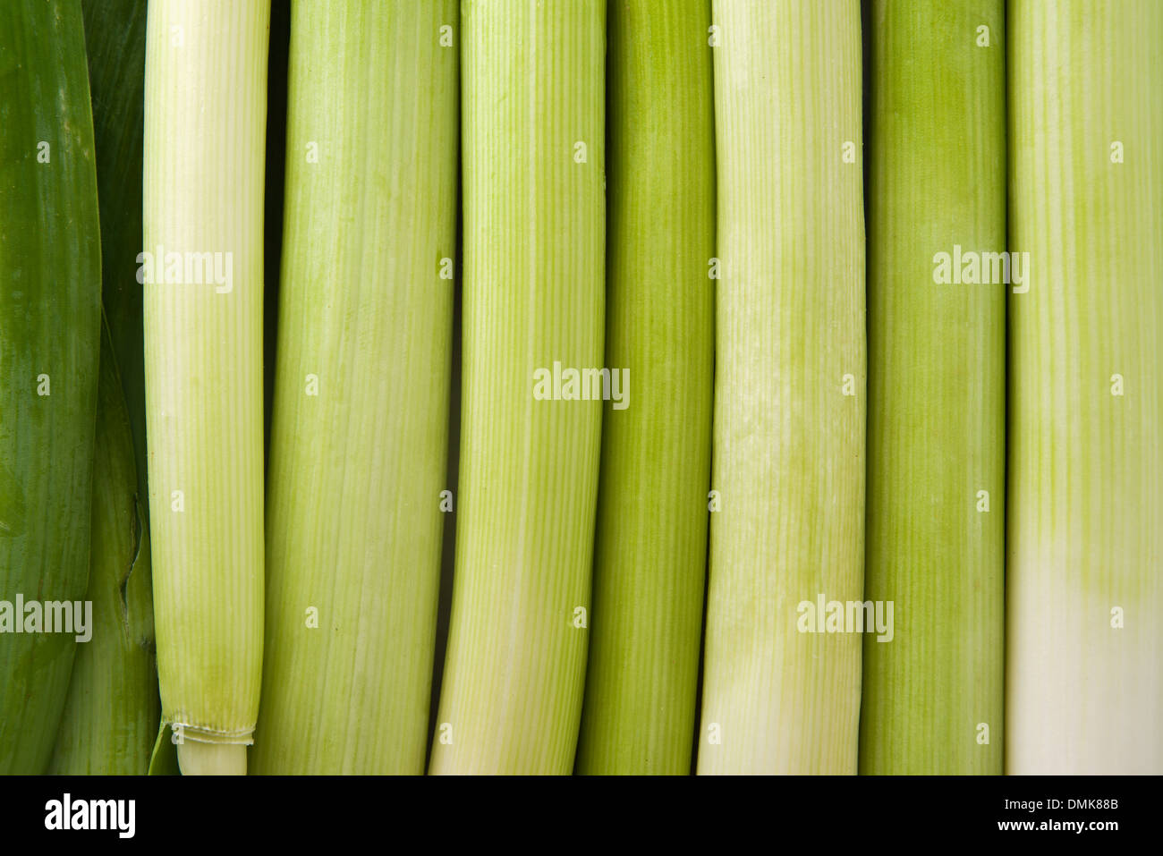 Fresh leek as abstract natural green background - Stock Image
