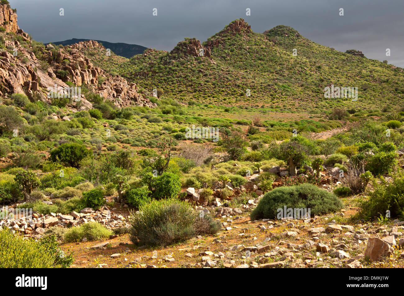 Nama Karoo shrubland, Richtersveld, Northern Cape province, South Africa - Stock Image