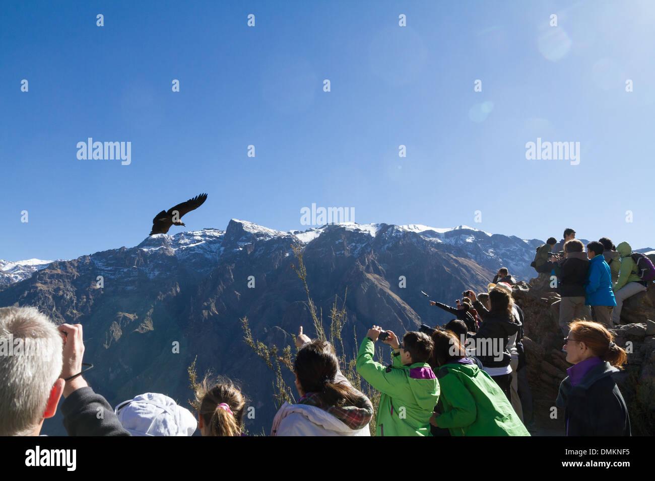 Cruz del Condor, Viewpoint at Colca Canyon, Peru - Stock Image