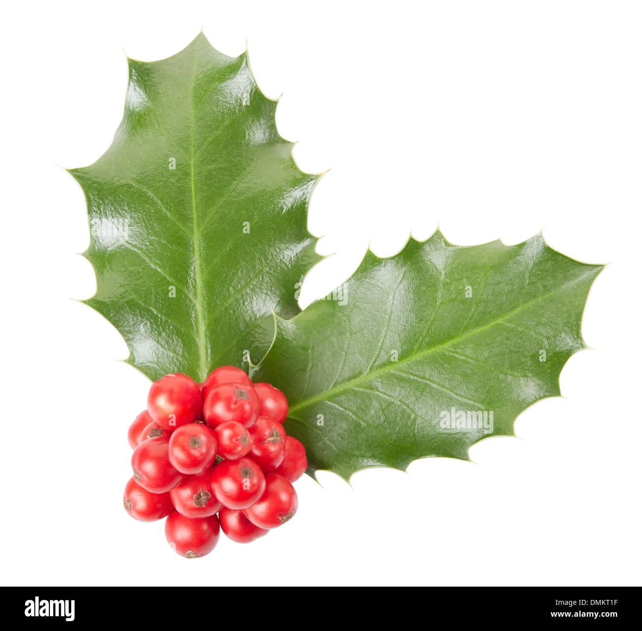 Holly, Christmas decoration - Stock Image