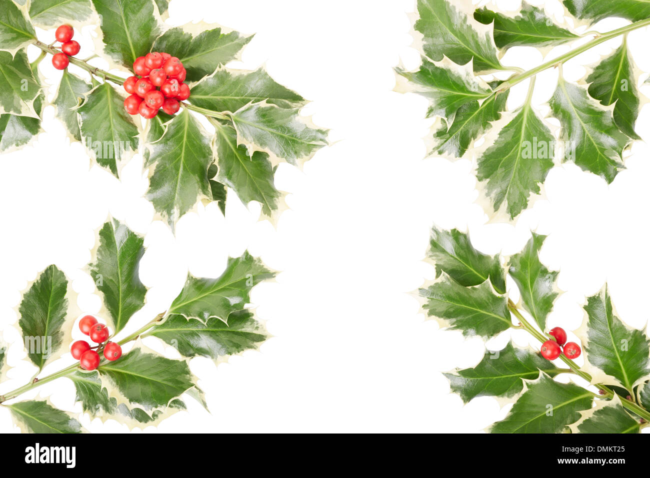 Holly twig border, Christmas decoration - Stock Image