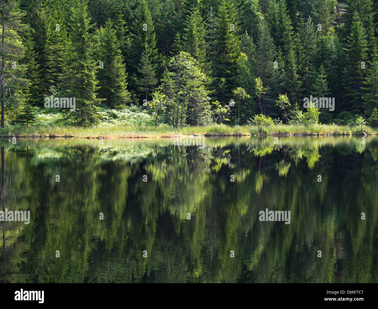Summer in the Norwegian forest, inviting green, water, trees, reflections, Nordmarka Oslo Norway - Stock Image