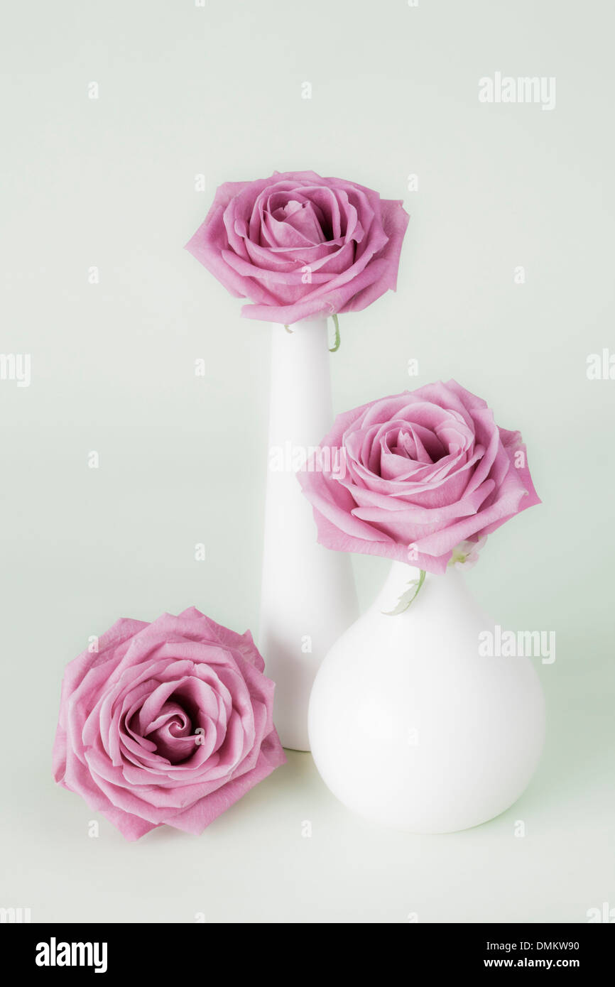 Three pink roses in white vases - Stock Image