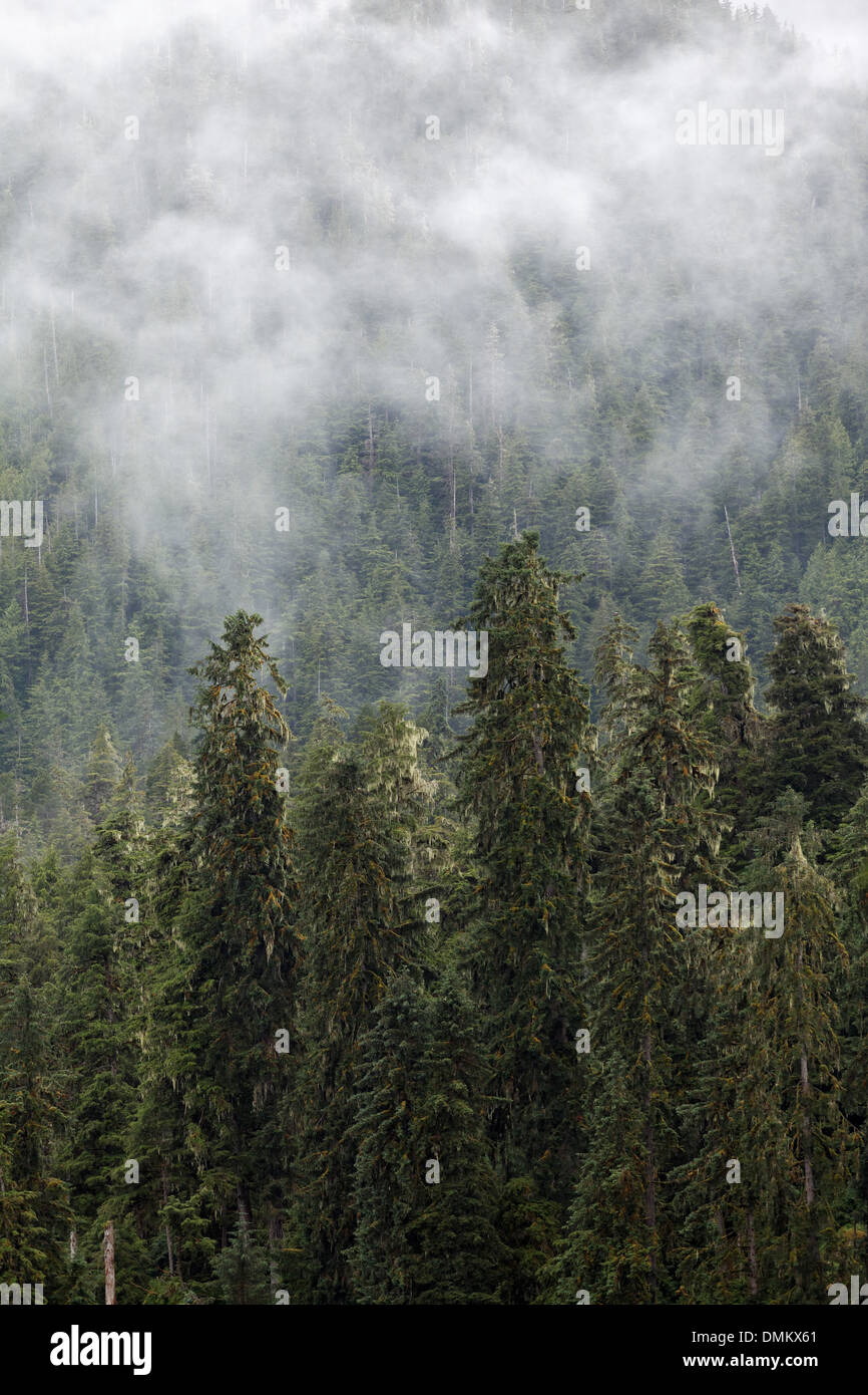 Mist shrouded forest, Tongass National Forest, Southeast, Alaska - Stock Image