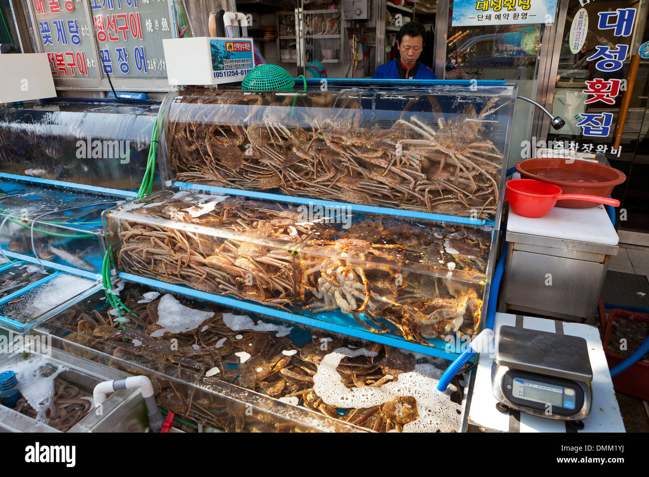 Outdoor Live Spider Crabs On Display In Front Of Sashimi Restaurant Stock Photo Alamy