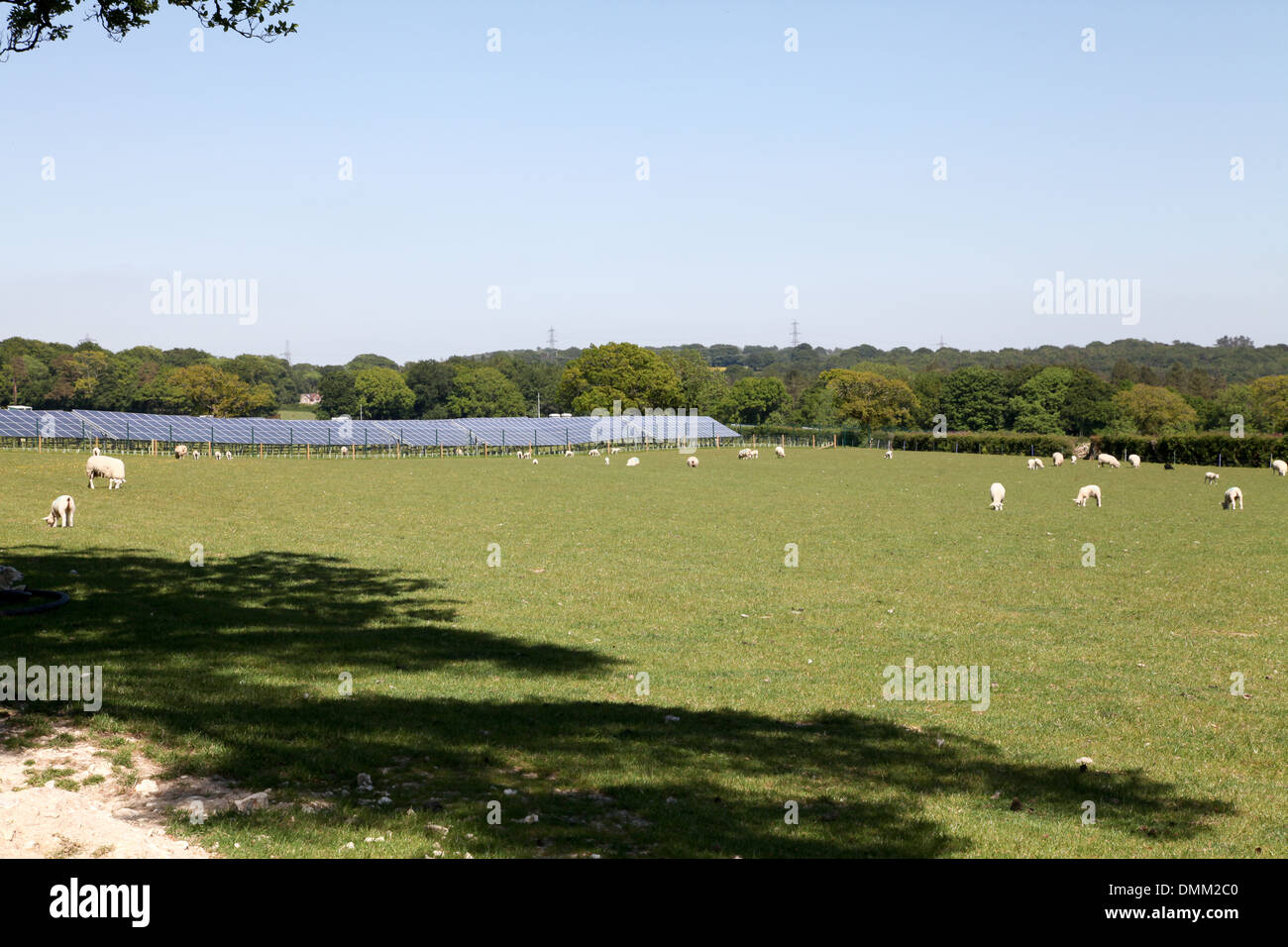 sheep grazing by solar panels - Stock Image