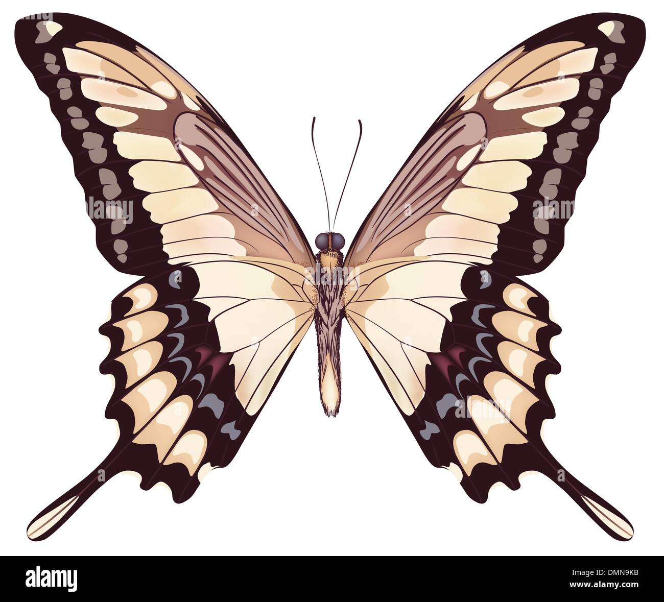 Isolated Light Butterfly VectorIllustration - Stock Image
