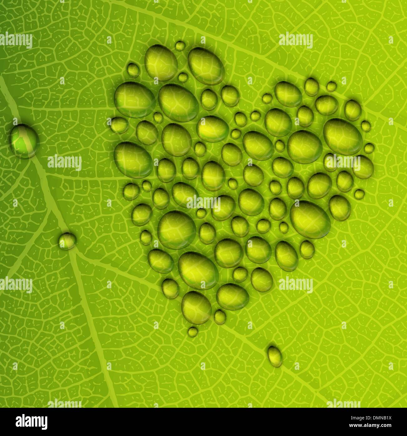 Heart shape dew drops on green leaf. Vector illustration, EPS10 - Stock Image