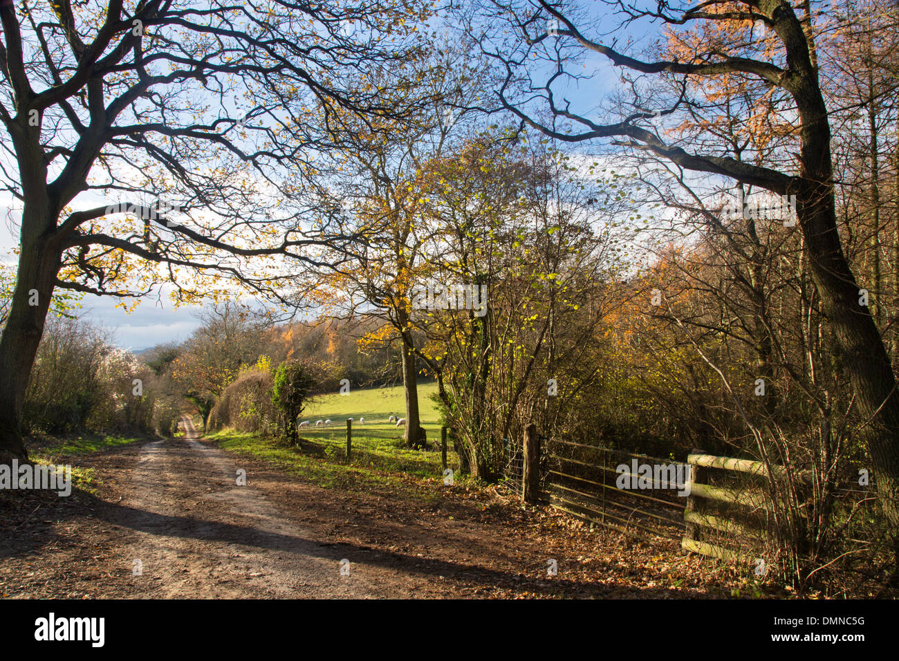 A Herefordshire country lane in autumn near Much Marcle, Herefordshire, England, UK Stock Photo