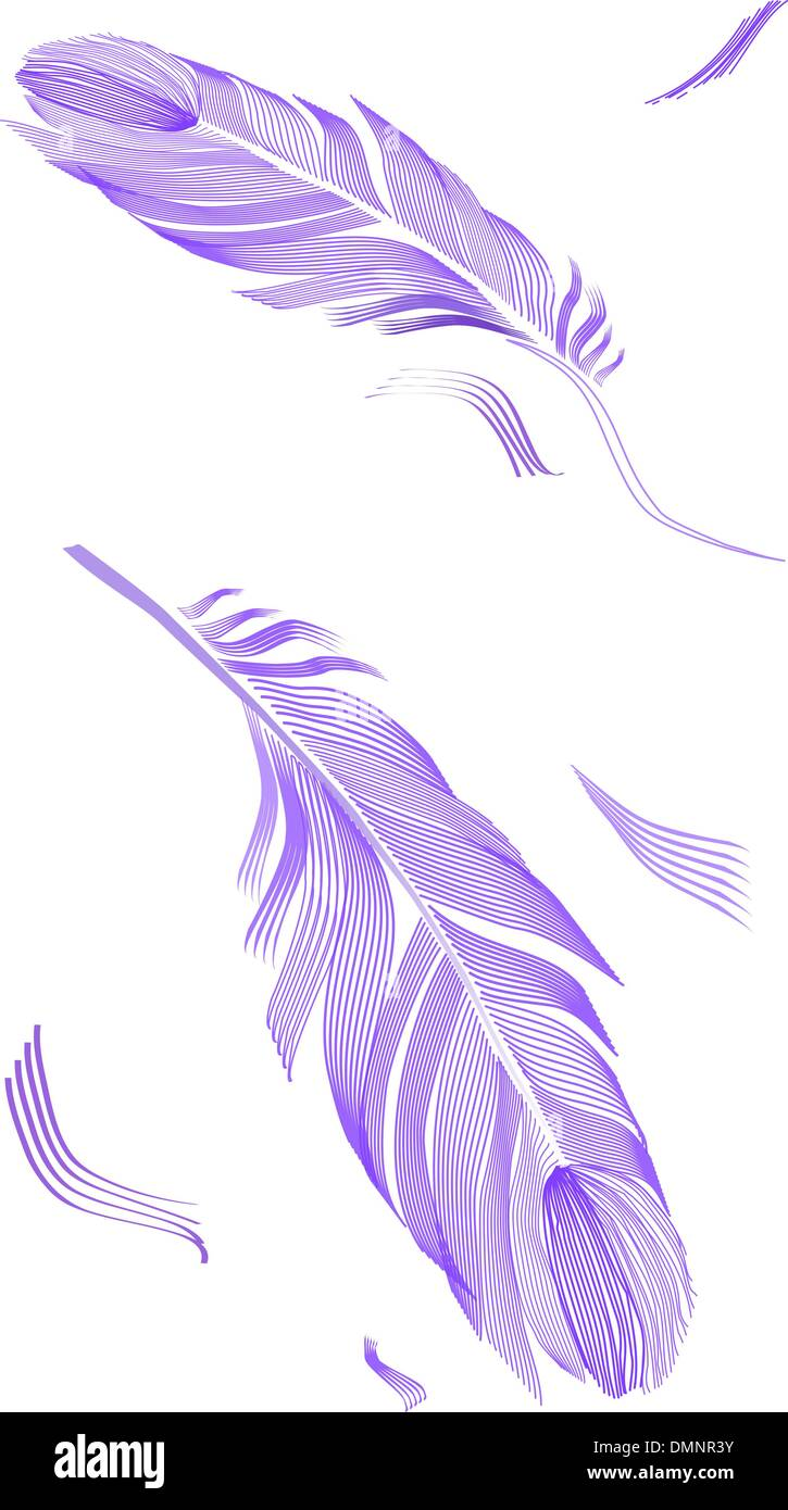 drawing bird feather - Stock Image