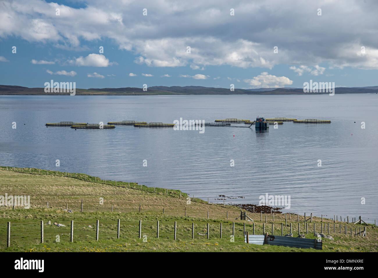 Salmon Farm, Unst, Shetland, Scotland - Stock Image