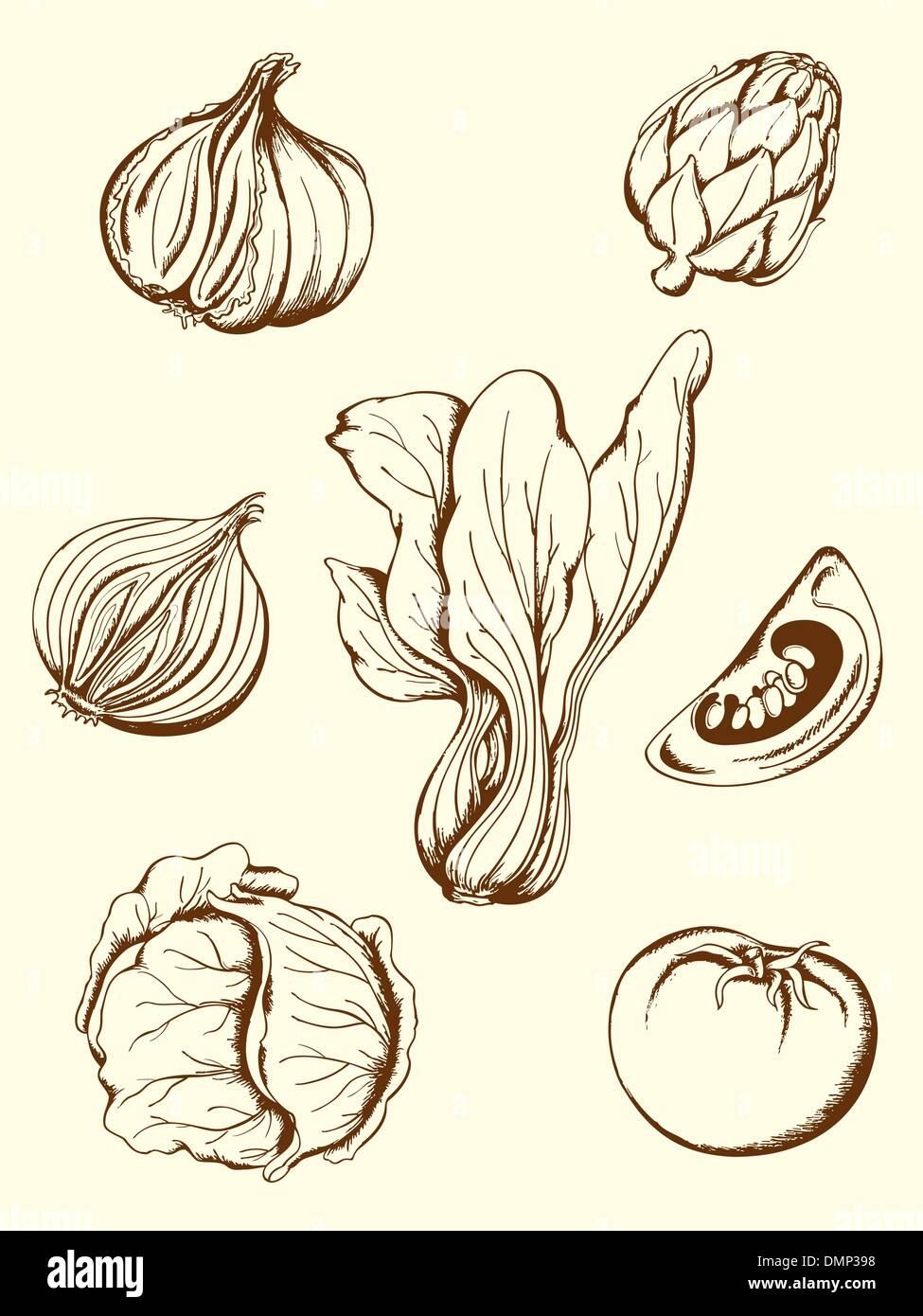 vintage vegetables - Stock Vector