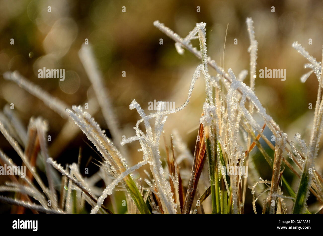 Grass frost detail - Stock Image