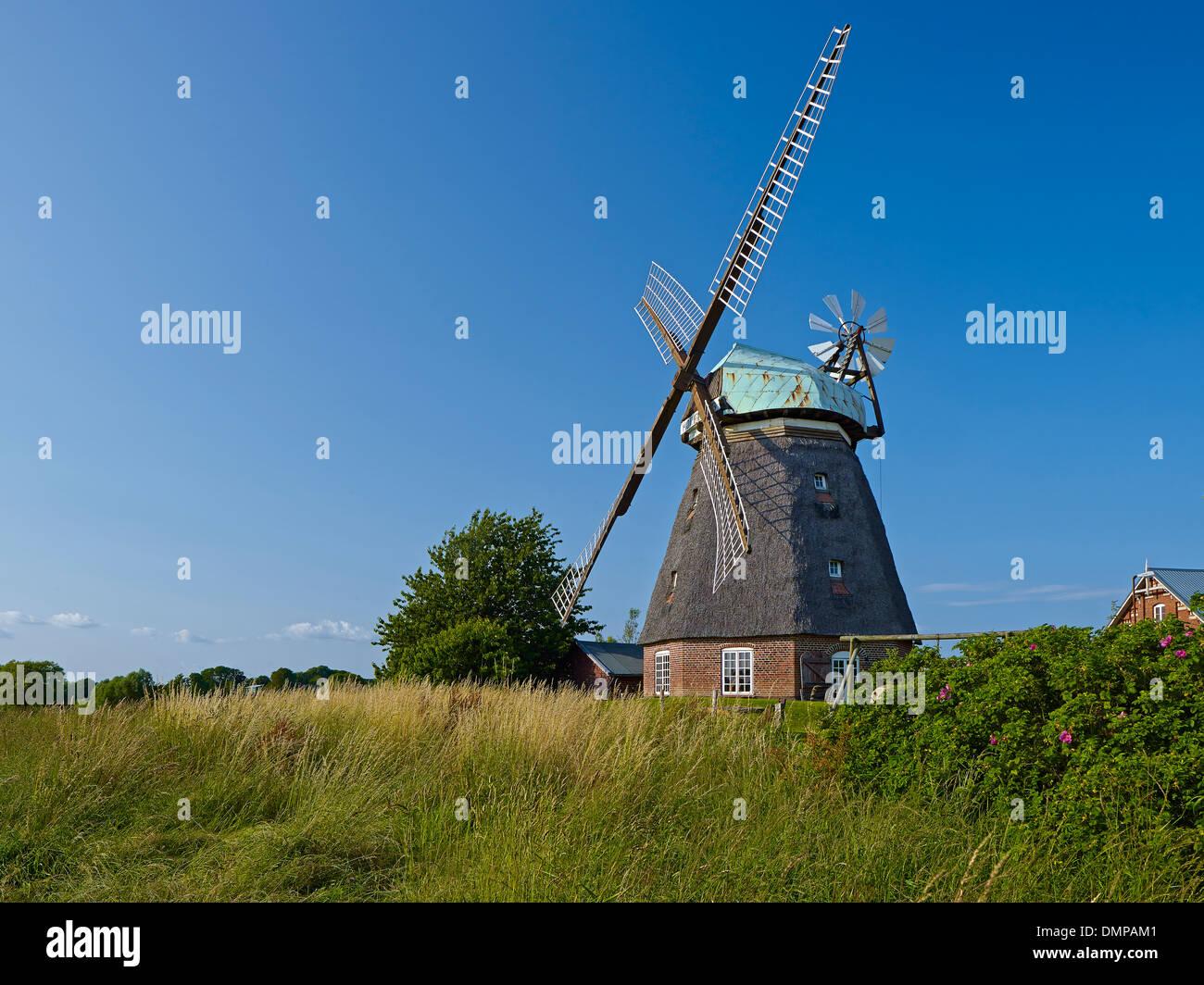 Windmill in Nübelfeld, Steinbergkirche municipality, Schleswig-Flensburg District, Schleswig-Holstein, Germany - Stock Image