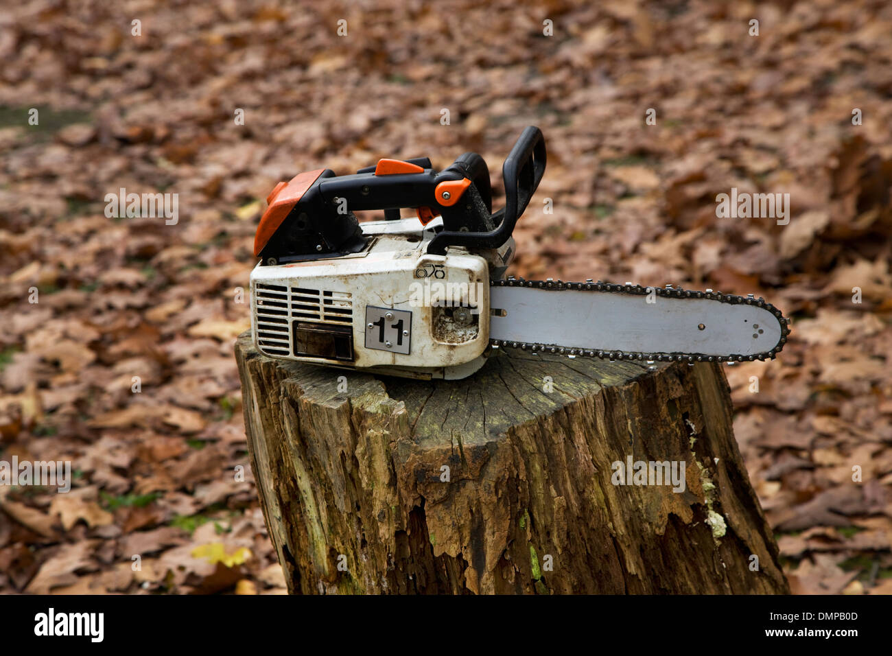 Chain saw, logging and forestry equipment resting on stump of cut tree in forest - Stock Image