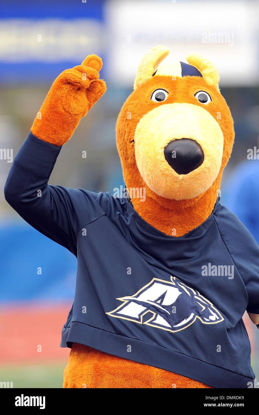 akron mascot zippy celebrates the zips interception of buffalo stock