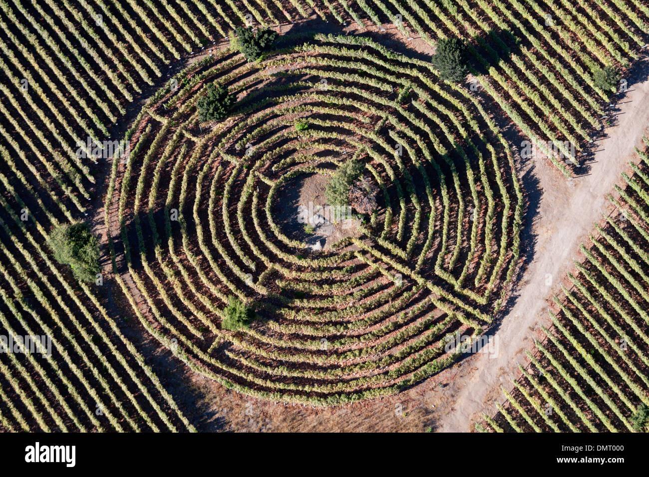 grapes vineyard Chile circle farming wine - Stock Image