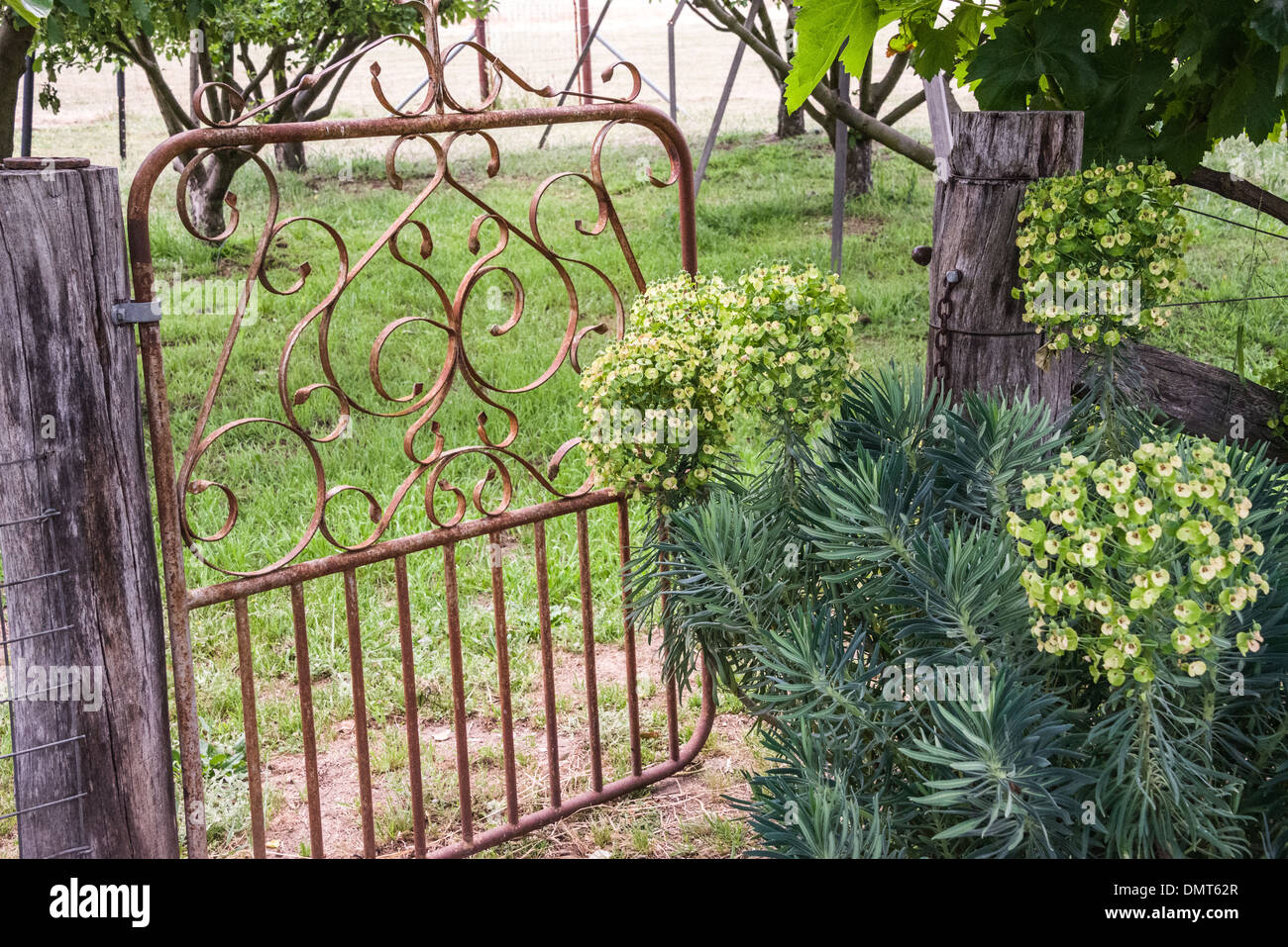 Old Garden Gate Iron On Farm With Herbs Surrounding Leading To Fruit  Orchard   Stock Image