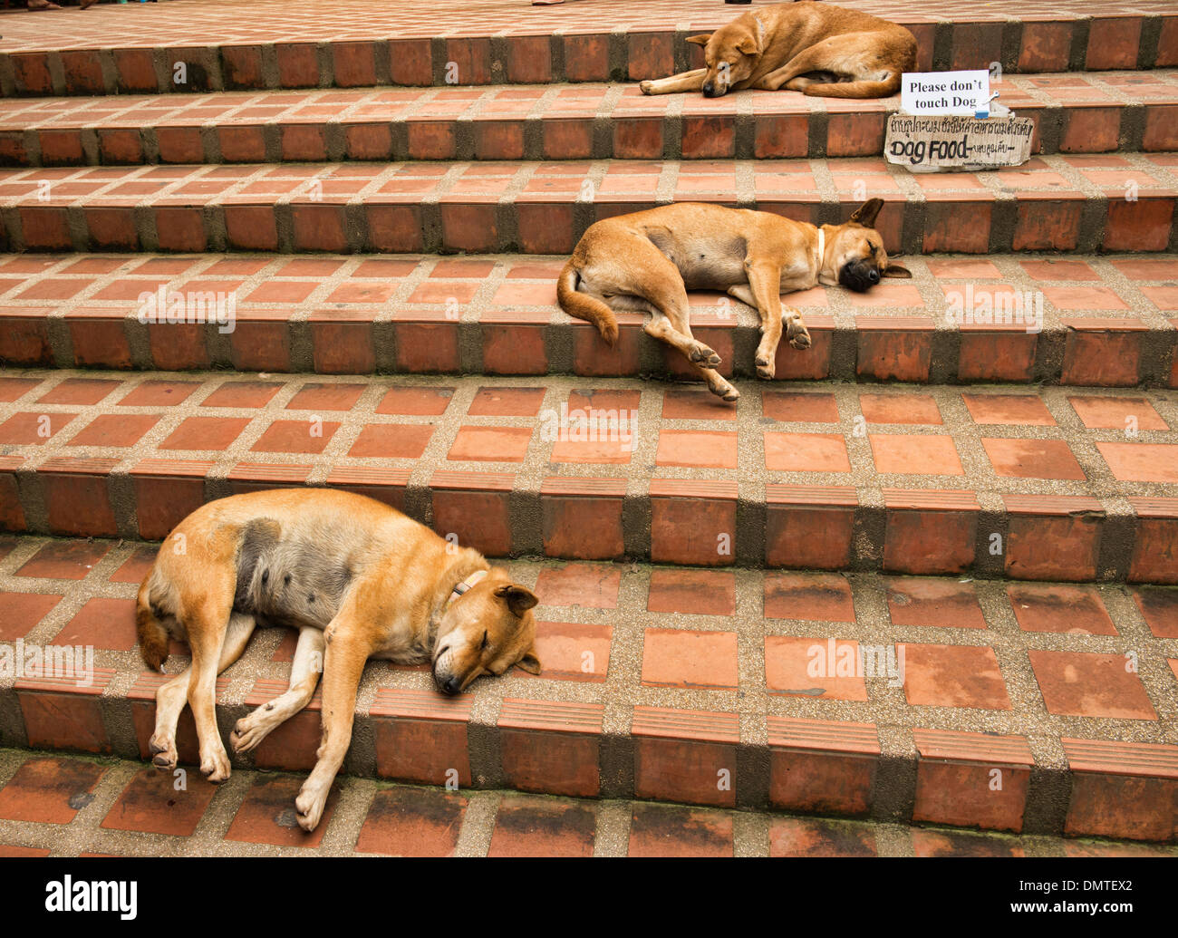 Let sleeping dogs lie, relaxing on the steps at Doi Suthep Temple, Chiang Mai, Thailand Stock Photo