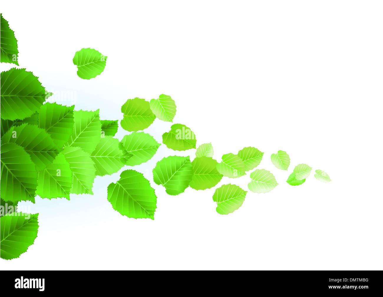 Fresh leaves on white background - Stock Vector