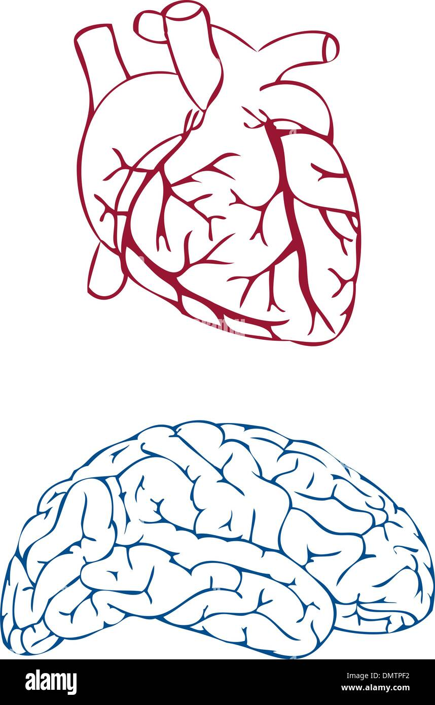 heart and brain, vector - Stock Image