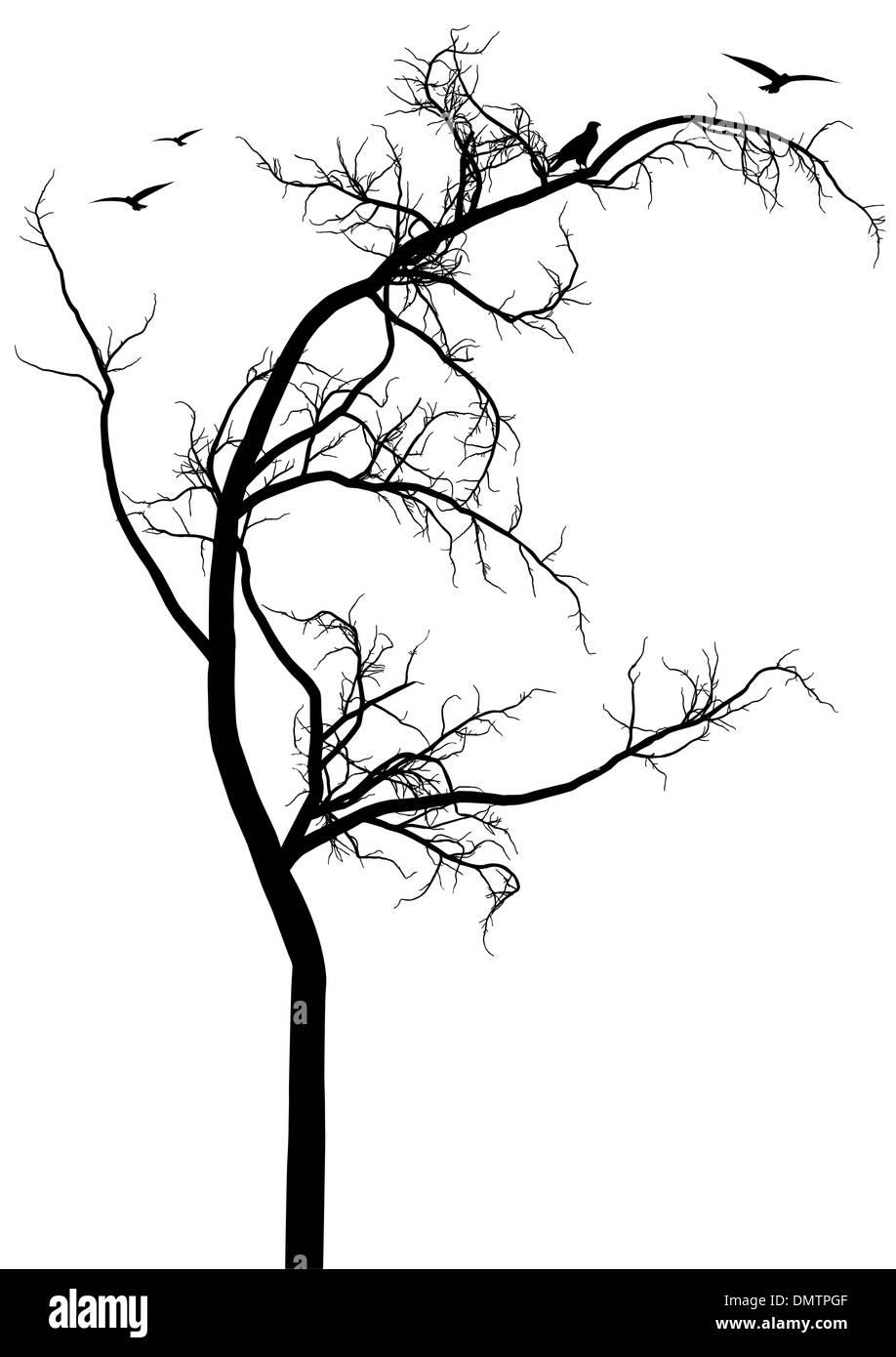 black tree silhouette, vector - Stock Image