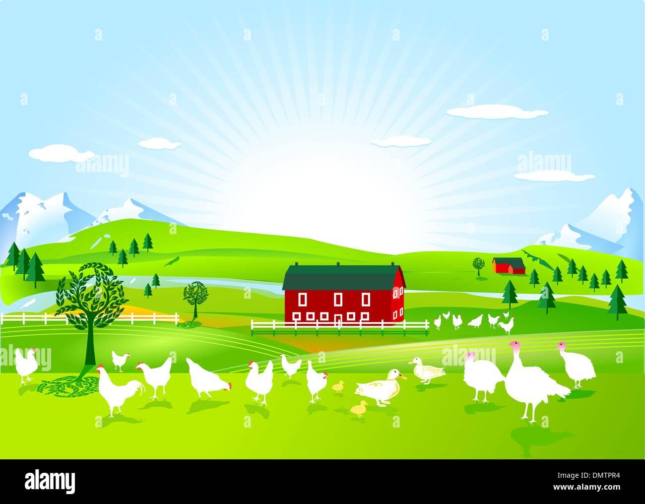 poultry farm - Stock Vector