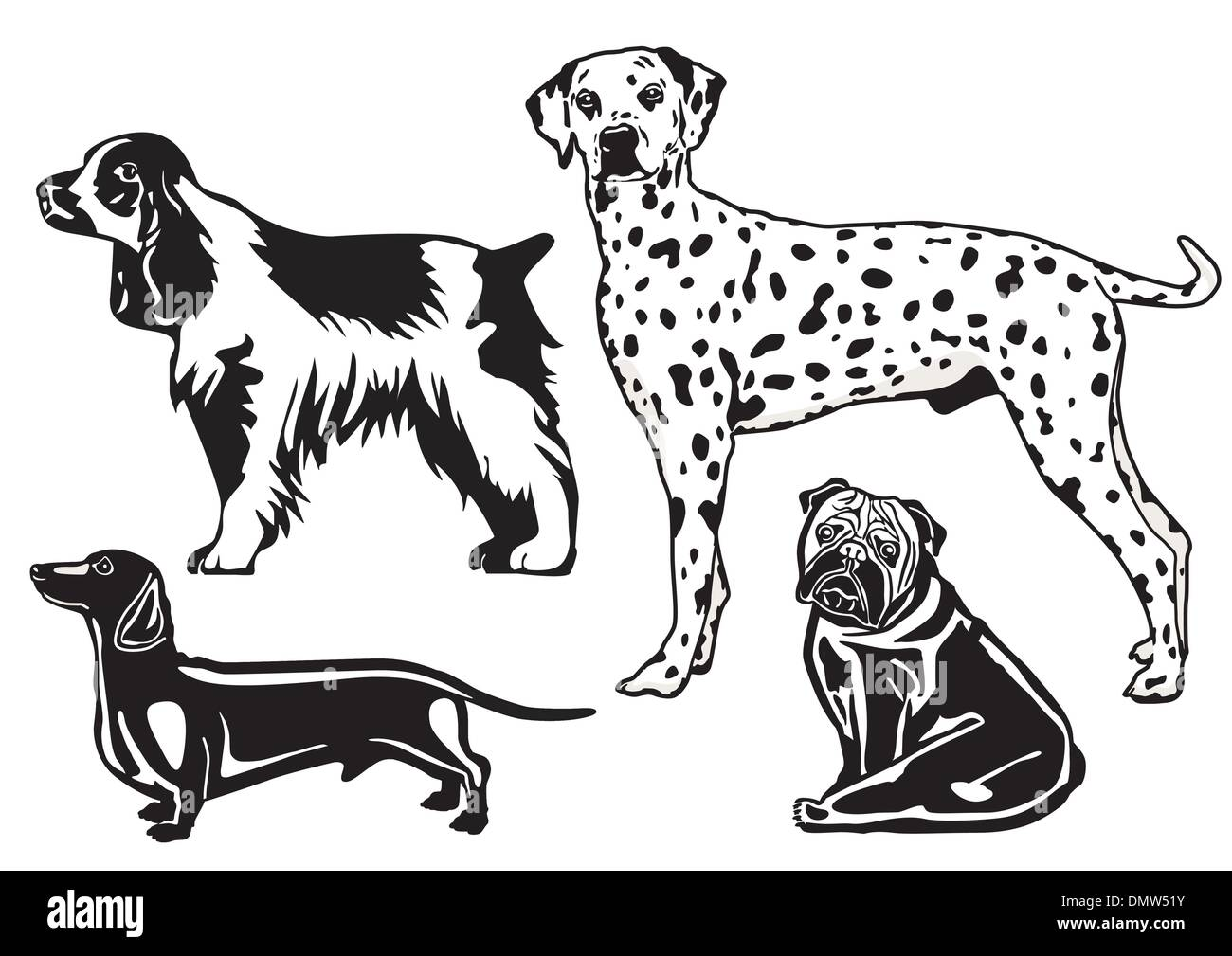 breeds of dogs - Stock Image
