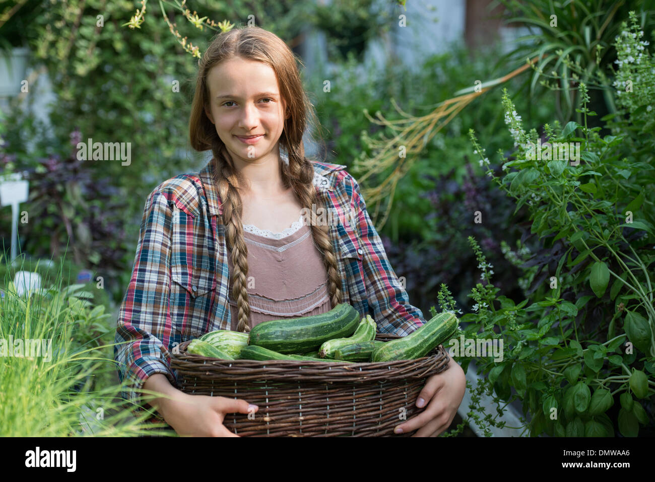 Summer on an organic farm. A girl holding a basket of fresh marrows. - Stock Image