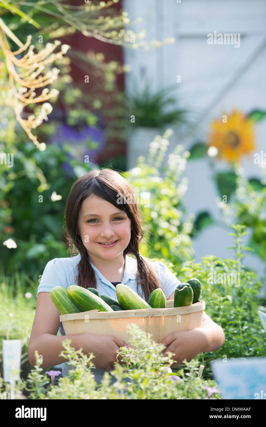 Summer on an organic farm. A girl holding a basket of fresh cucumbers. - Stock Image