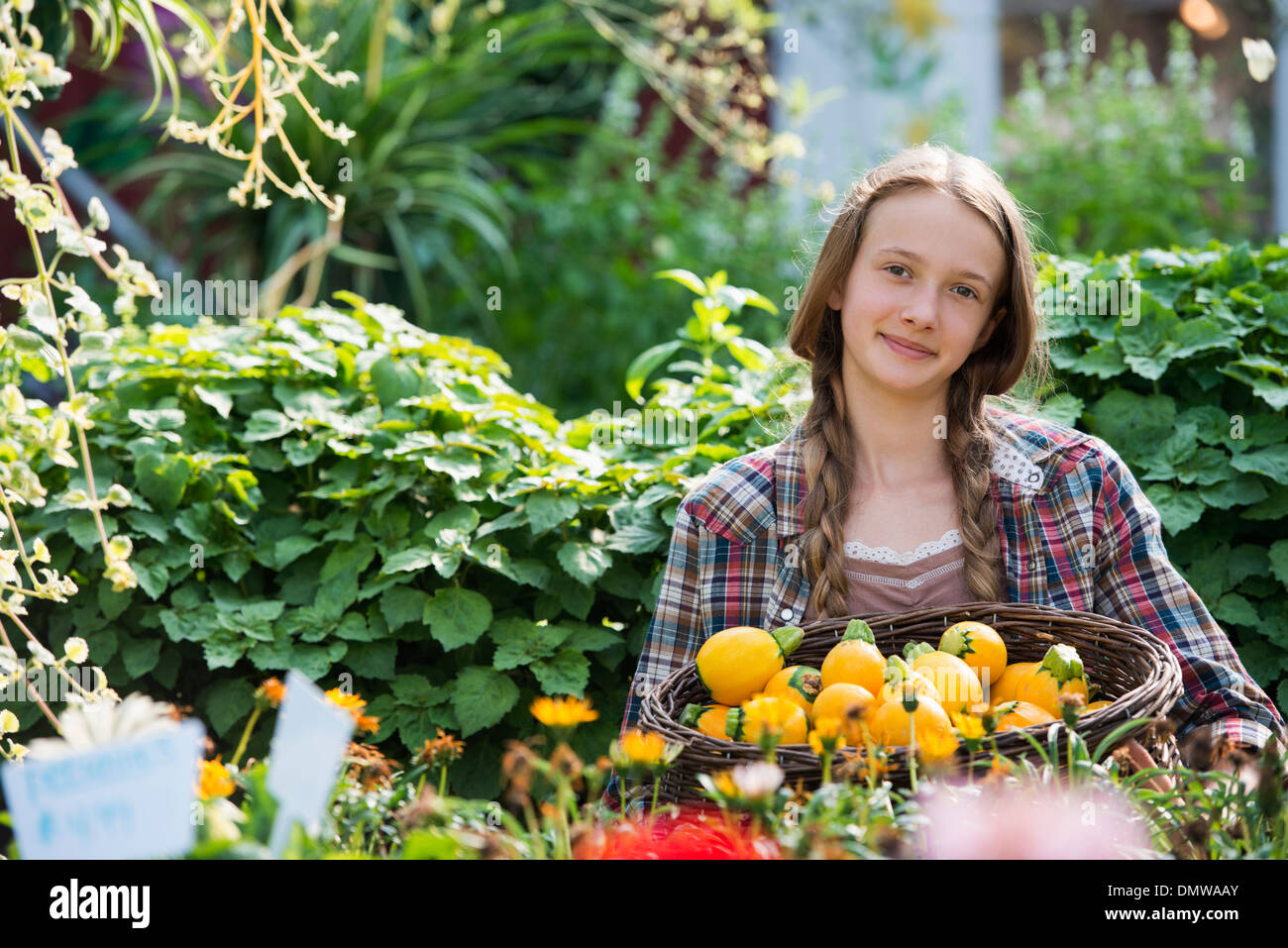 Summer on an organic farm. A girl holding a basket of fresh squash vegetables. Stock Photo