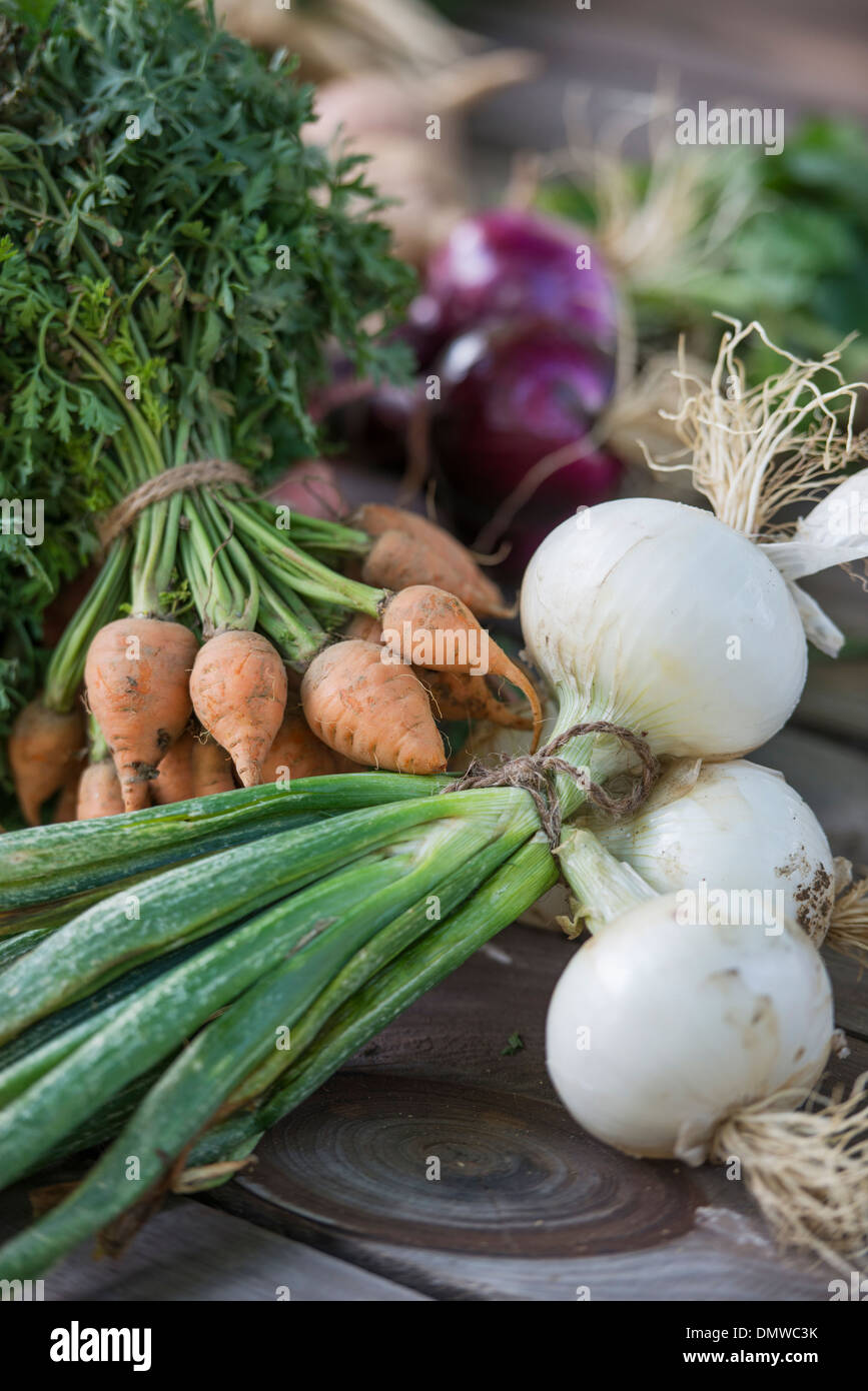 Sorting and chopping freshly picked vegetables and fruits. - Stock Image