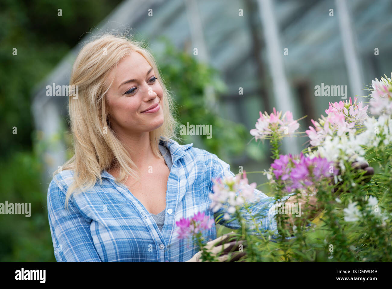 An organic flower plant nursery. A woman working. - Stock Image