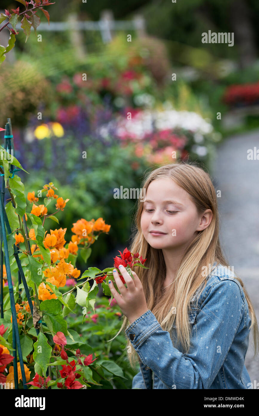An organic flower plant nursery. A young girl looking at  flowers. - Stock Image