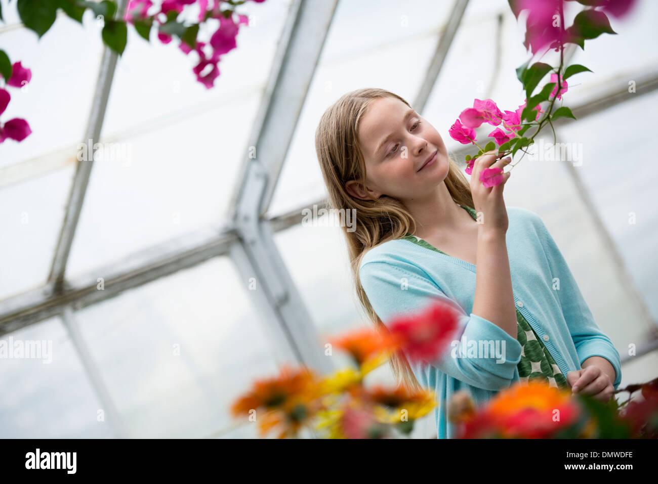 An organic flower plant nursery. A young girl looking at  flowers. Stock Photo