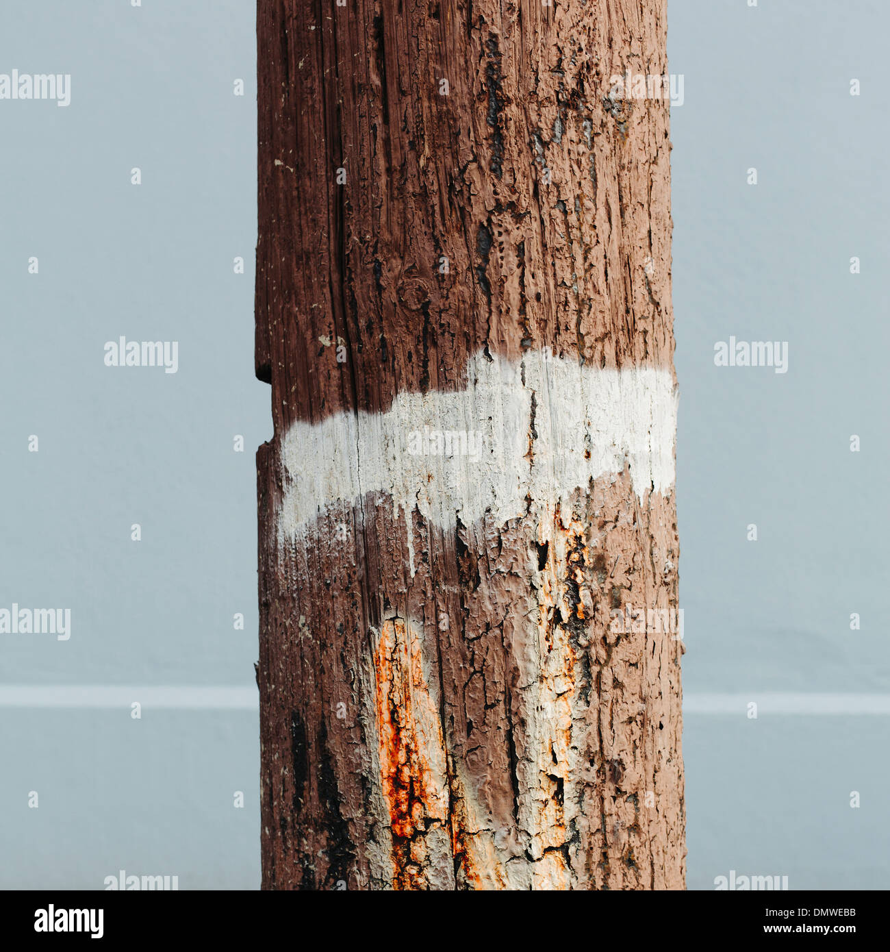 An old cracked and worn wooden telephone pole with a white painted strip around it. - Stock Image