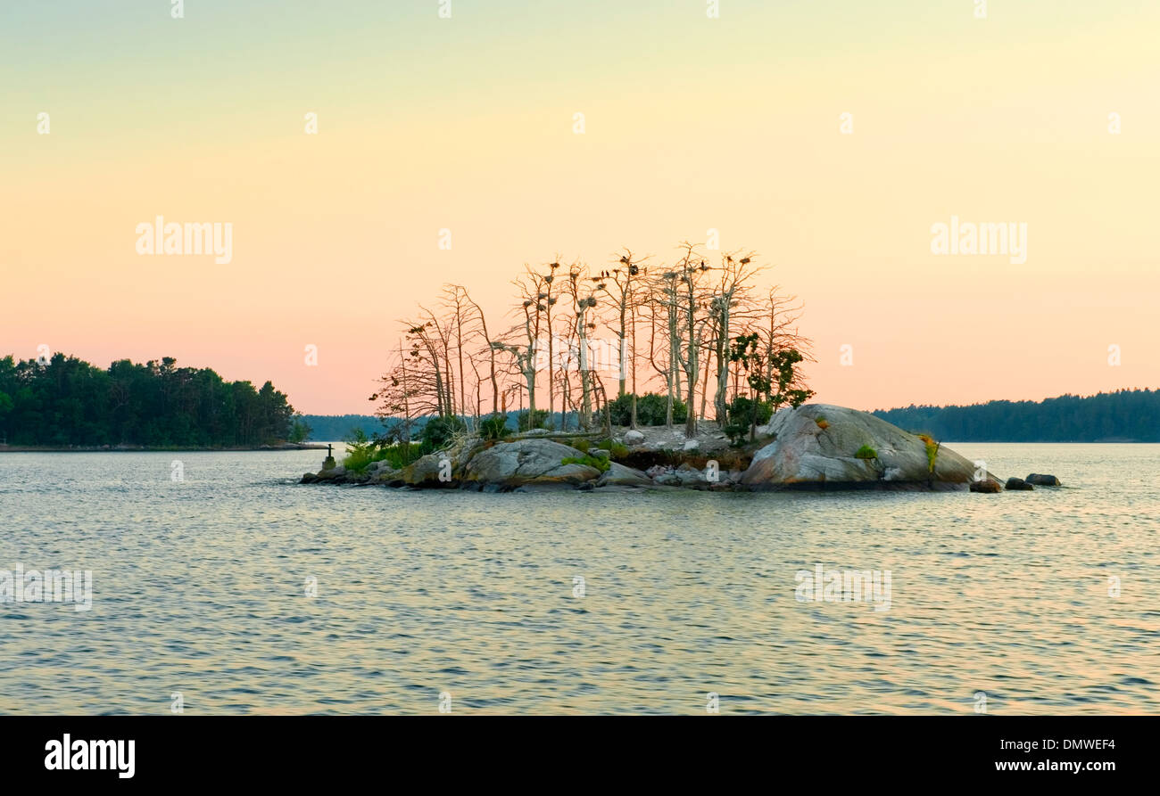 Dusk view of a bird roosting island in the Stockholm Archipelago, Sweden. - Stock Image