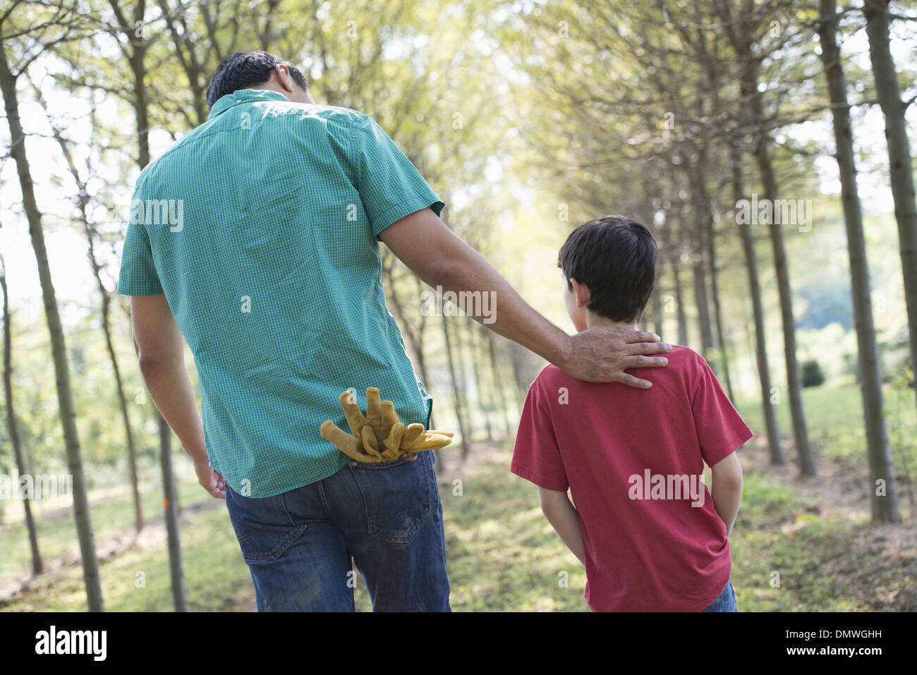 A man and a young boy walking down an avenue of trees. - Stock Image