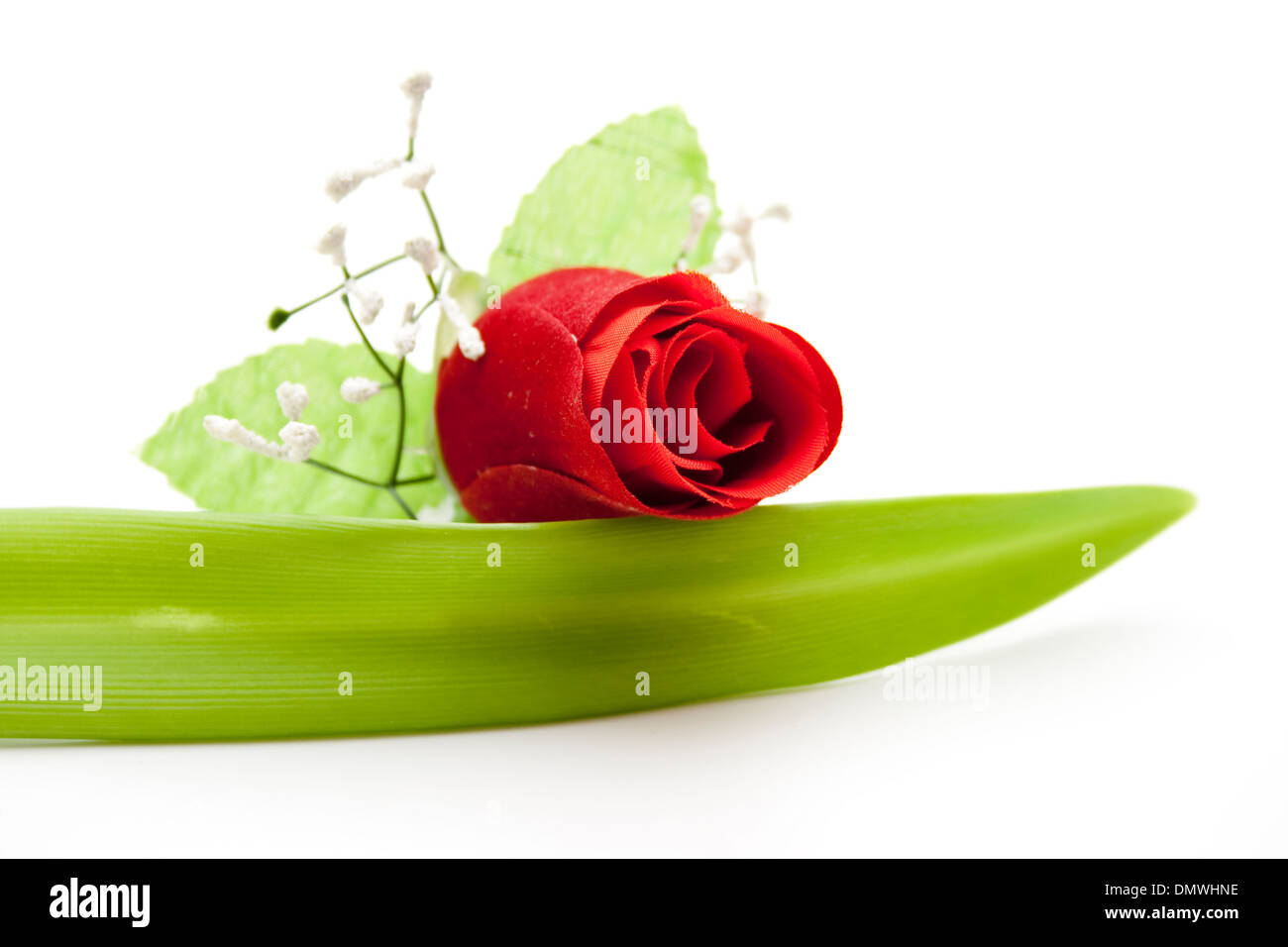 Red rose with sheet - Stock Image