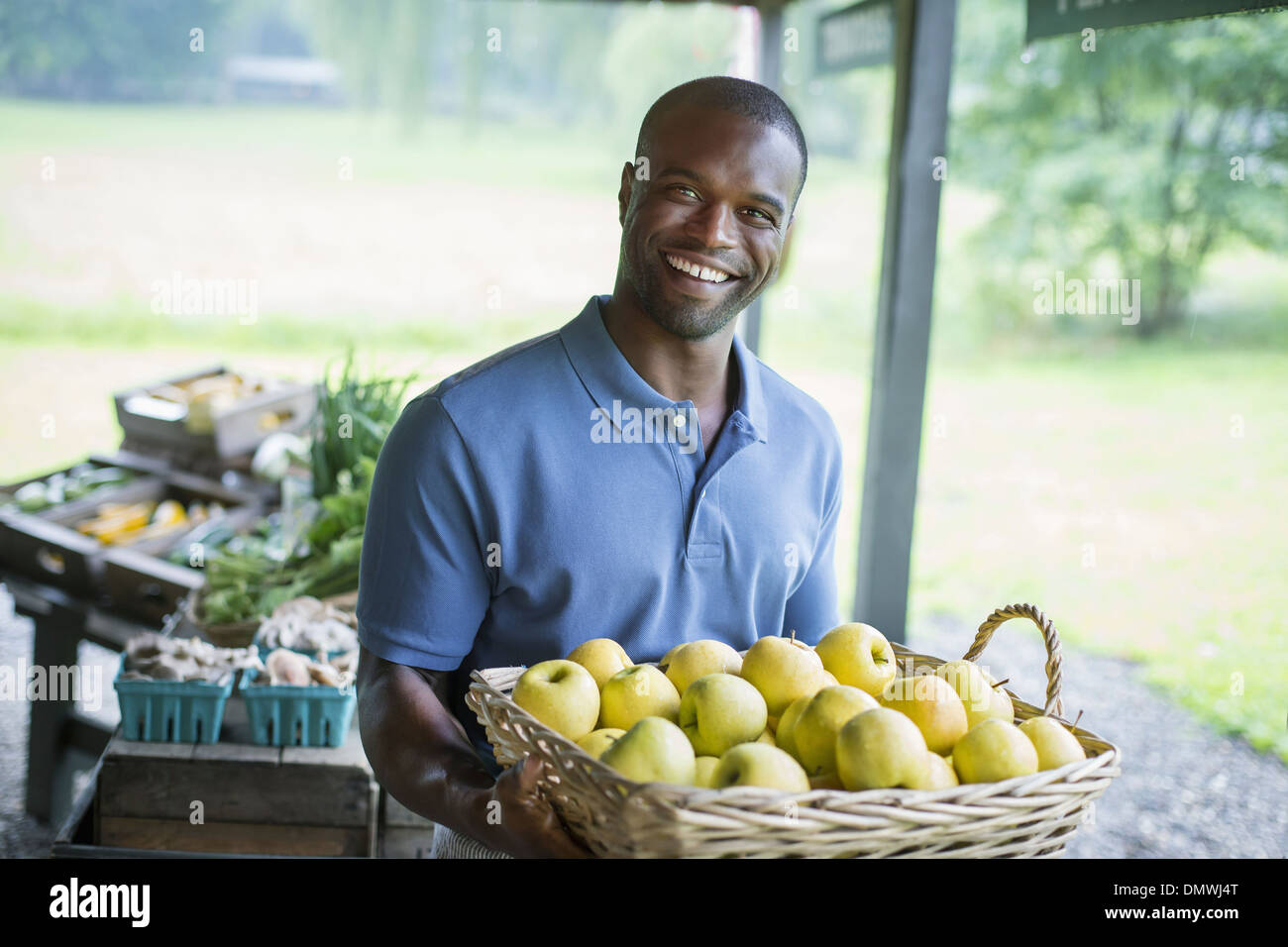 An organic fruit and vegetable farm. A man carrying vegetables. Stock Photo