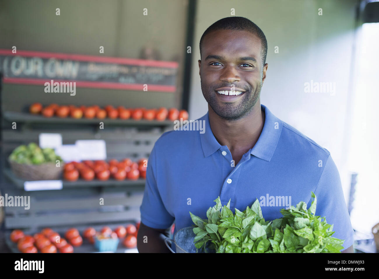An organic fruit and vegetable farm. A man carrying vegetables. - Stock Image