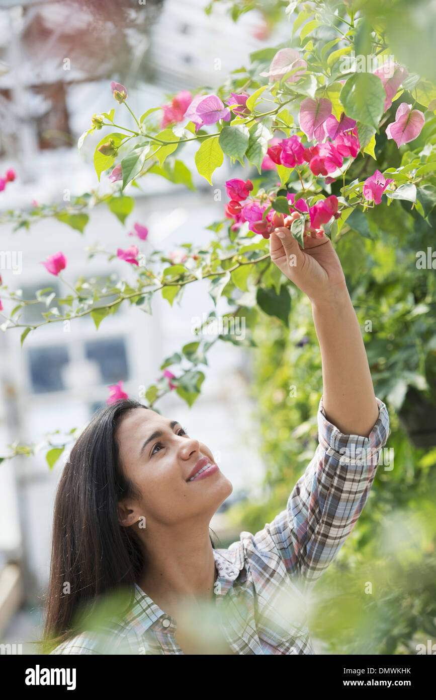 A woman in an organic nursery greenhouse. Stock Photo
