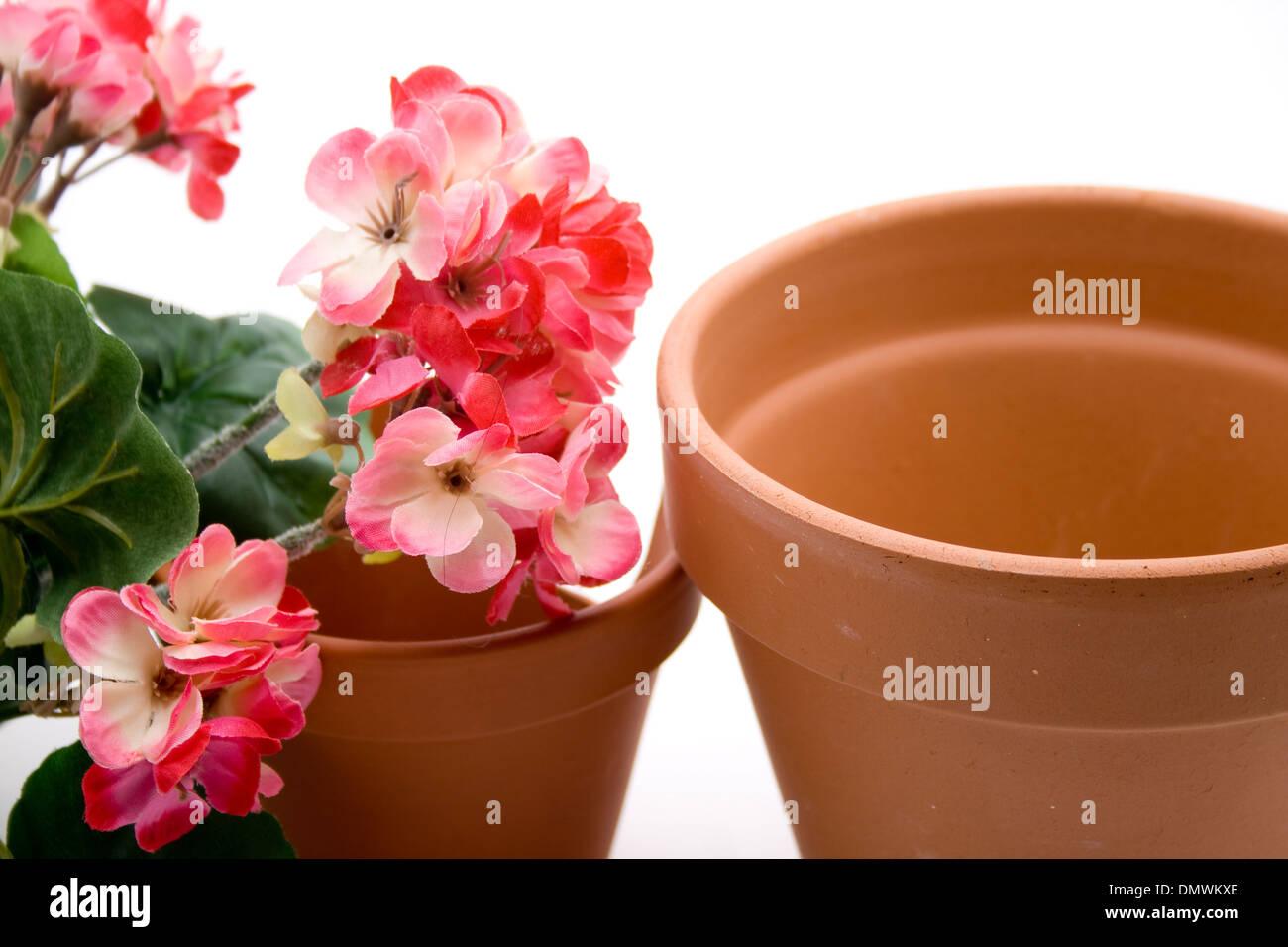 Geranium with plant pot - Stock Image