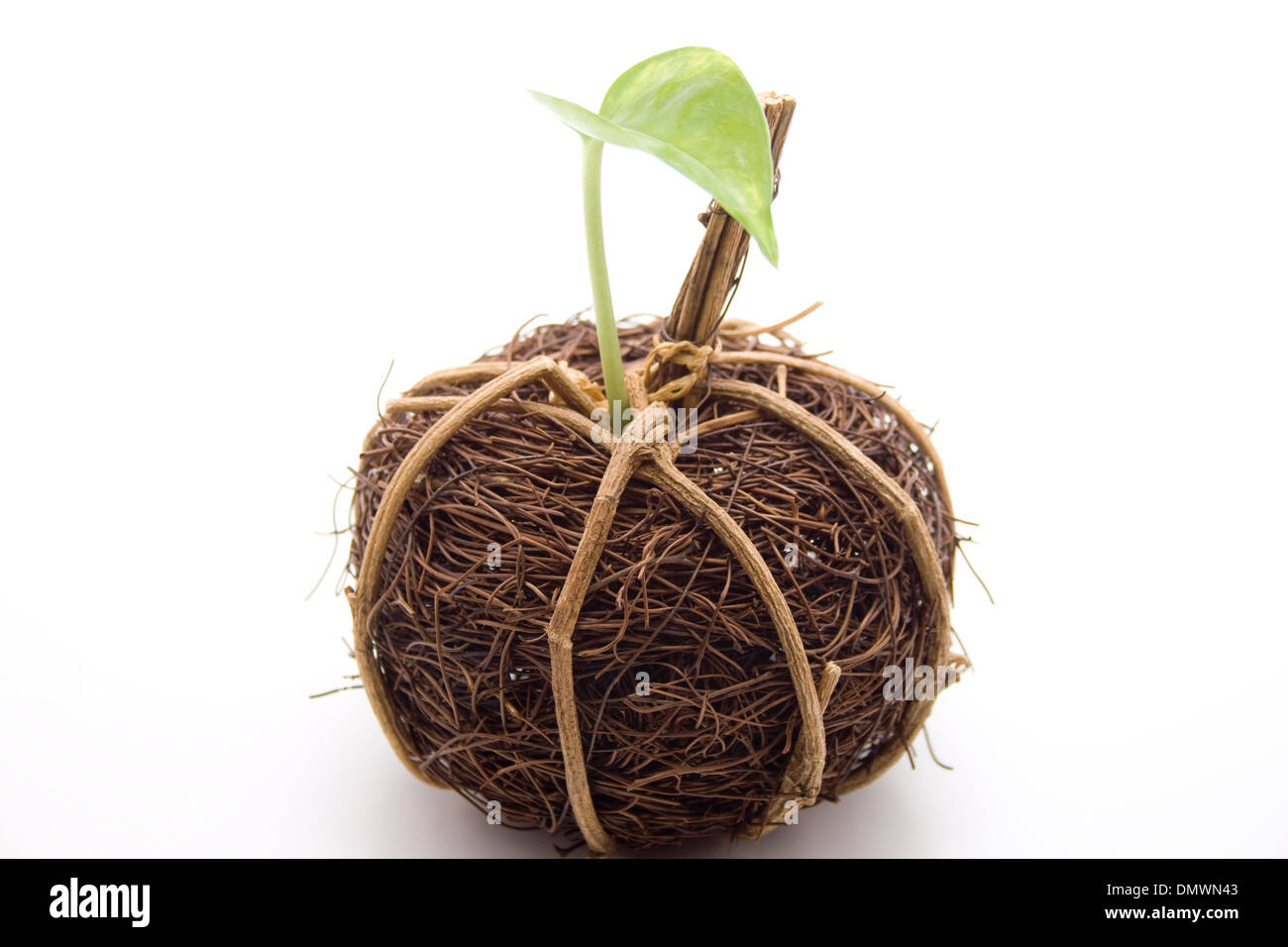 Straw ball with plant sheet - Stock Image