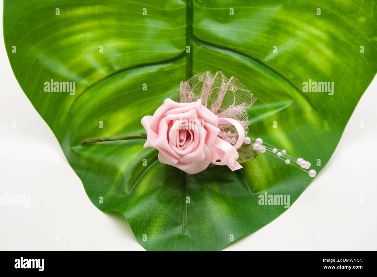 Rose with plant sheet - Stock Image