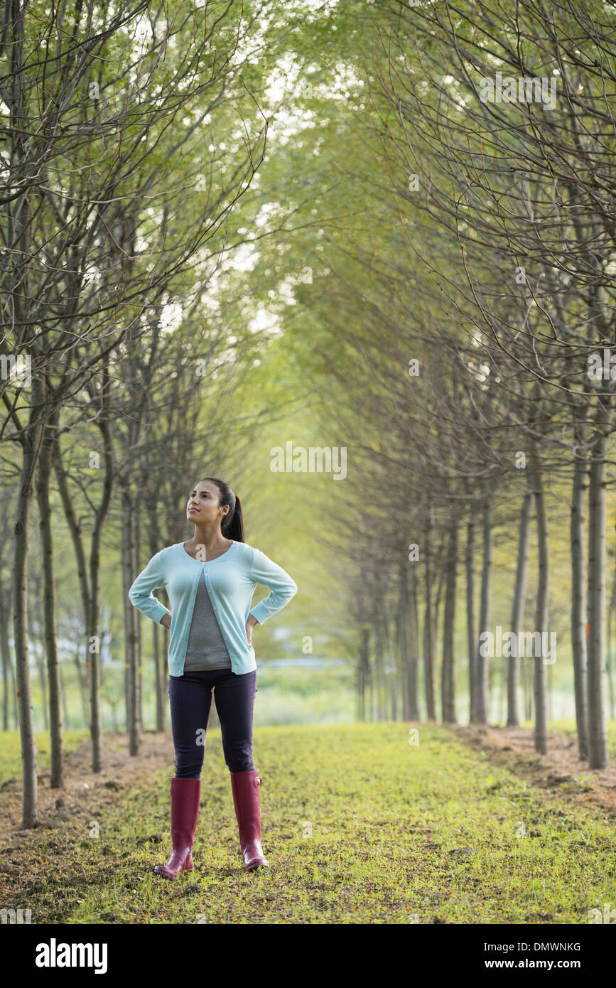 A woman in two rows of trees looking upwards. - Stock Image