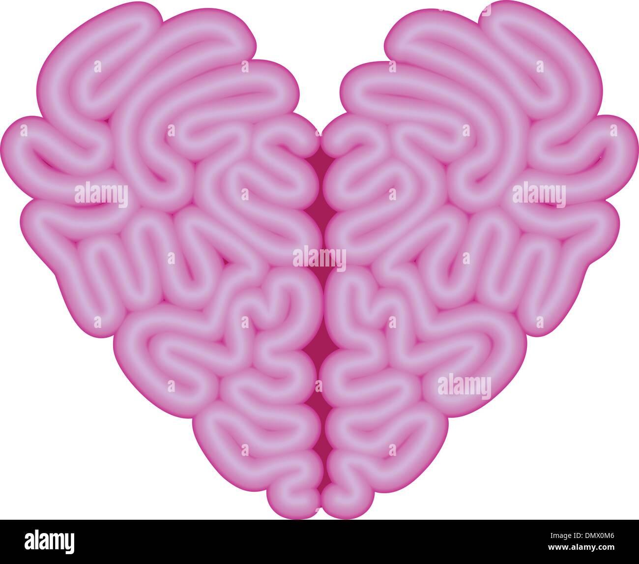 heart brain, vector - Stock Image