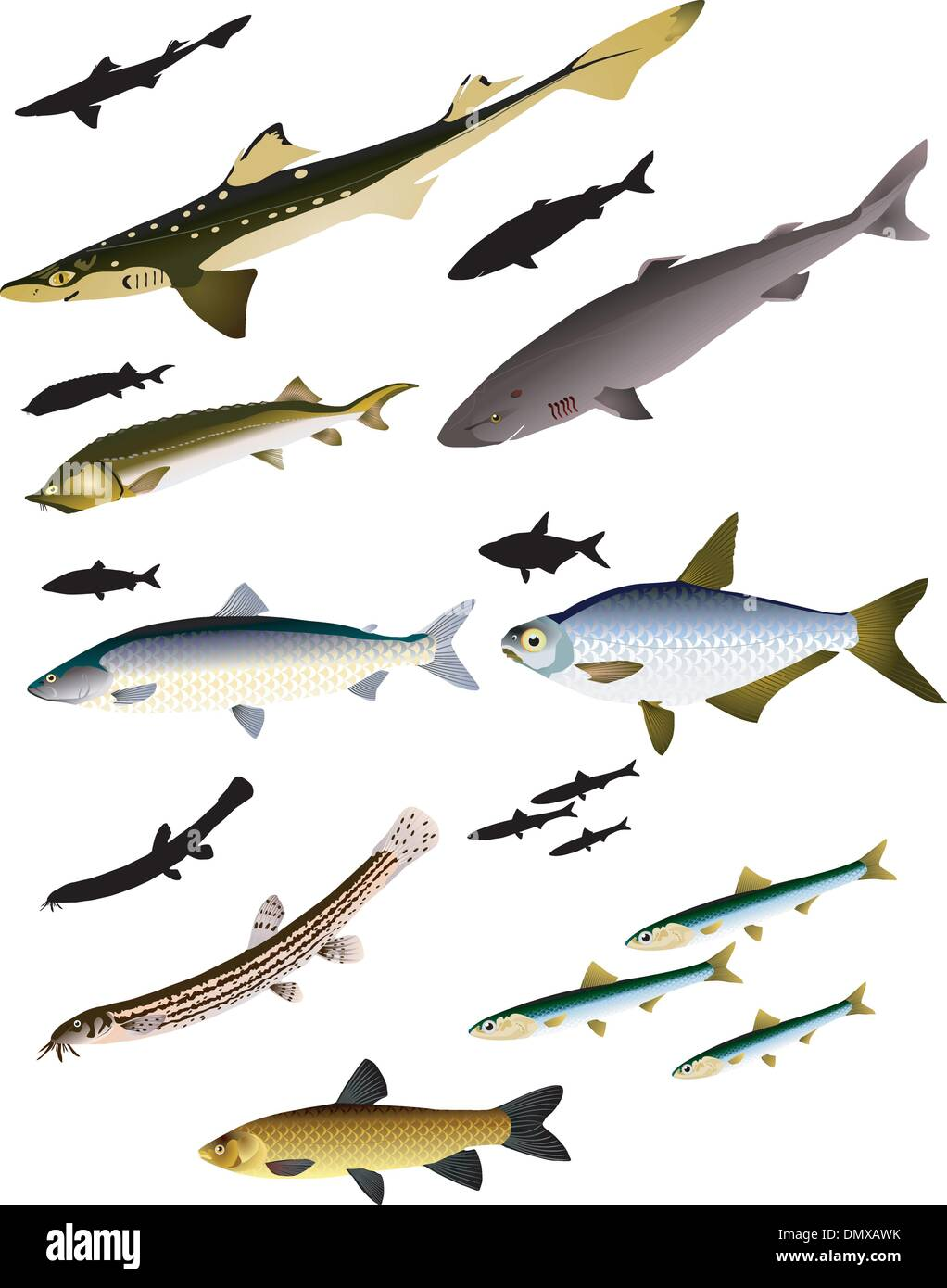 collection of vector images of fish - Stock Vector