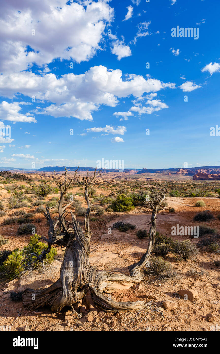 View towards the Petrified Dunes, Arches National Park, Utah, USA - Stock Image